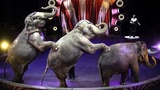 Ringling Bros. elephants to perform final show Sunday