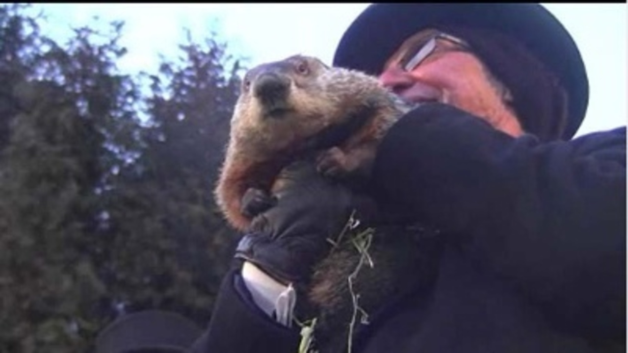 punxsutawney women It's been well over six weeks since famed rodent punxsutawney phil told americans to expect the eventual  small bumps in woman's face turn out to be migrating.