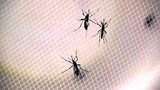 2nd Zika case confirmed in St. Johns County