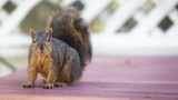 Michigan woman on hook for up to $2M after squirrel torching caused fire