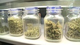 Orlando commissioners to vote on extending marijuana dispensary ban
