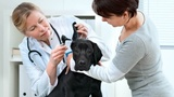 Mobile vet visits now available in San Antonio