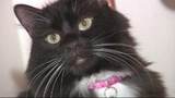 Royal Mail warns family after cat attacks