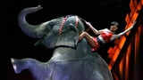 Curtain fell for elephants performing at Ringling Bros.