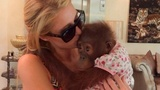 Celebs posing with apes criticized by UN body