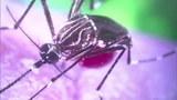 New Zika Virus case reported