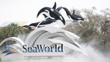 SeaWorld Entertainment to layoff hundreds