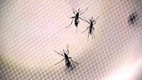 7 new Zika cases reported in Central Florida