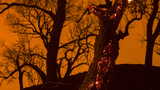 Wildfires burn tens of thousands of acres in California