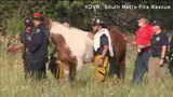 Dramatic horse rescue documented on Twitter sparks big reaction