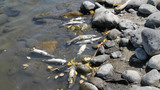 Thousands of fish die in Yellowstone River