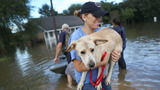 Rescuing the furry victims of Louisiana's flooding