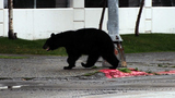FWC investigates reports of bear killed in Lake County
