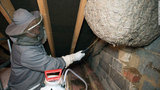 10,000 stinging wasps make colossal nest in English country house