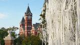 Auburn's iconic oaks attacked again