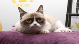 Grumpy Cat to join 'Cats' on Broadway