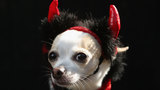 16% of people plan to dress pets up for Halloween