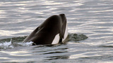 Antarctic sea becomes world's largest marine protected area