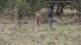 Guy punches kangaroo