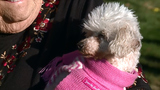 Woman reunites with missing poodle after 9 years