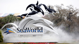 SeaWorld sees drop in attendance, revenue in 2016