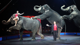 Circus owners to discuss closing of 'Greatest Show on Earth'