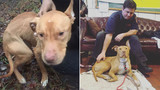 Pit bull rescued from crack house finds new home in firehouse